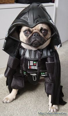 """The image """"http://vtipy.netroof.eu/data/images/darth-dog-vader.jpg"""" cannot be displayed, because it contains errors."""